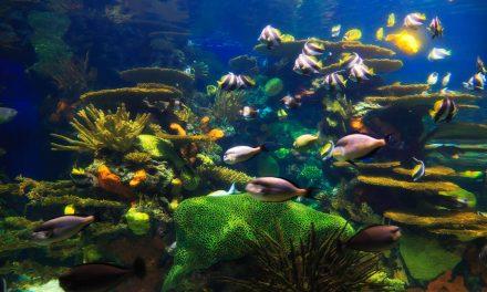 Saiba como acertar na iluminação para aquário
