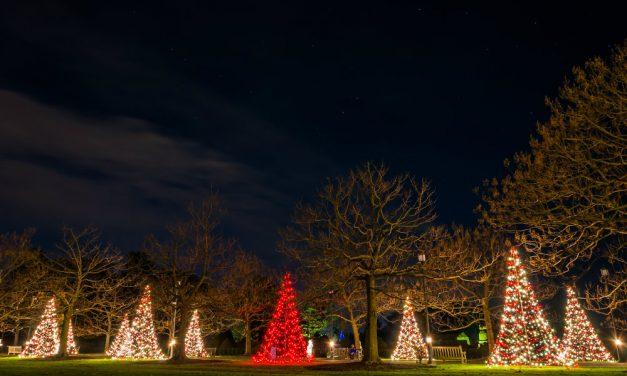 3 ideias de iluminação e decoração de Natal para o jardim da sua casa